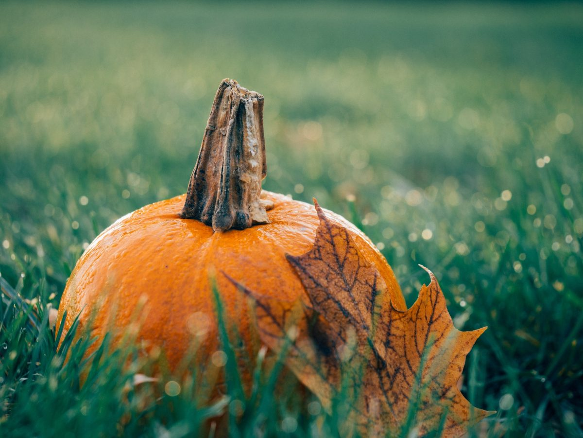 pumpkin-1030817_1920-1200x901